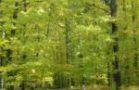 Bercé - forêt domainiale